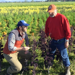 Tim & Ray inspect their kale crop